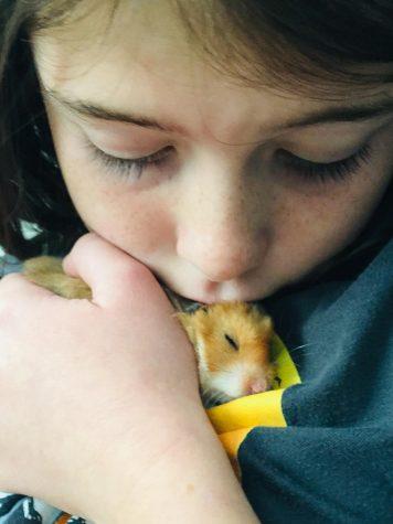 Pohlonskis adopt hamster